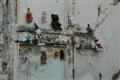 Falra másztak a macik...