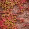 Már őszi színekbe öltözve