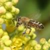 A méhek titokzatos világa