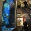 Egy komoly mérétű tengeri akvárium
