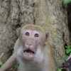 Még a majomnak is leesett az álla