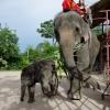 Meg lehet ülni az elefántot
