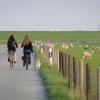 Itt a kutyát sétáltatni kell, a bárányok hallgatnak, kerítés mögött ...