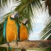 Maximum a papagájok törik meg a csendet