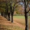 Csodaszép őszi napunk volt az Ópusztaszer Történeti Emlékparkban