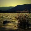 Bartók Csongor: Tornai-tó