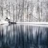 Szemán Viktor: Téli halastó
