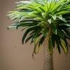 Növényvilág a vendégház udvarán
