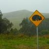 Állatos figyelmeztető közlekedési táblák2