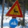 Figyelmeztető közlekedési táblák1