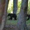 Medvekaland a Szent Anna-tónál